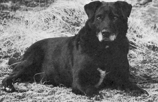 Собаки святого Джона отдыхают фото