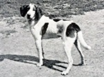 Retro Trigg Hound dog