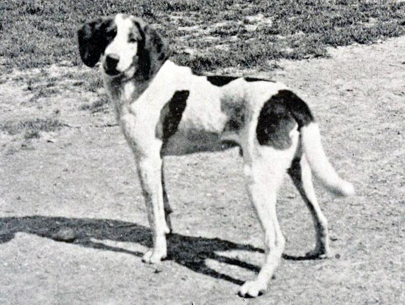 Retro Trigg Hound dog wallpaper