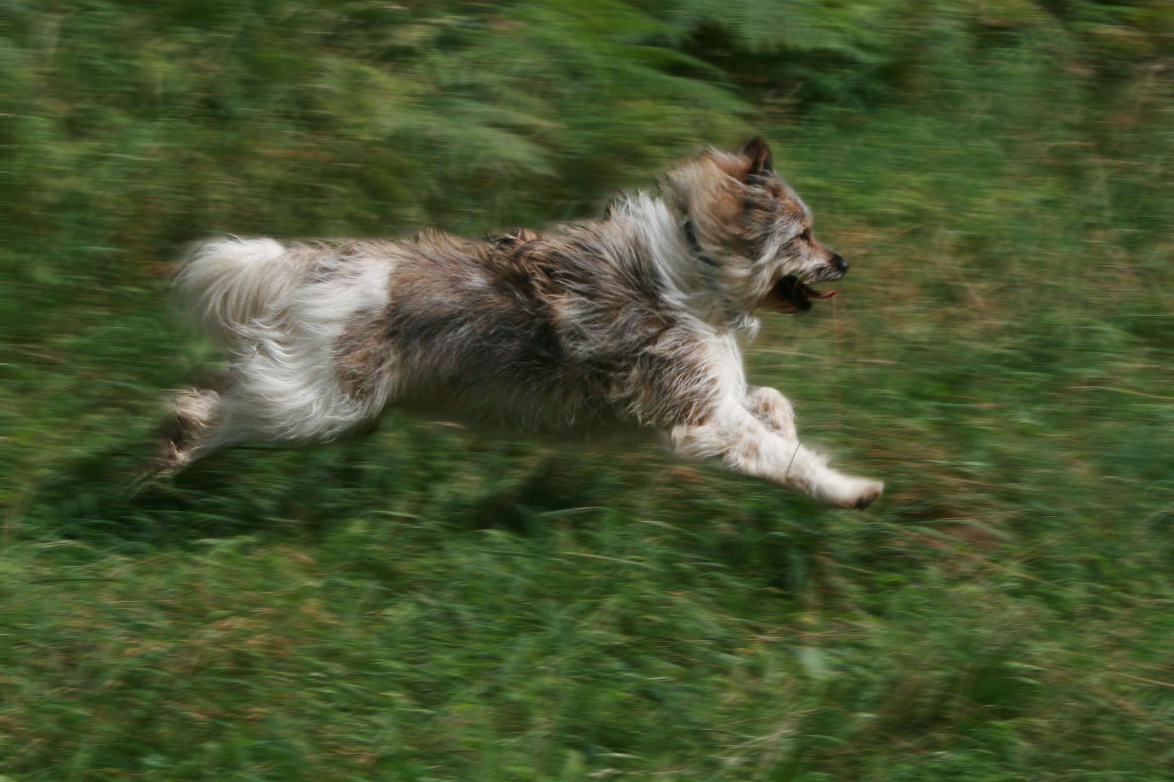 Собака эло бежит фото