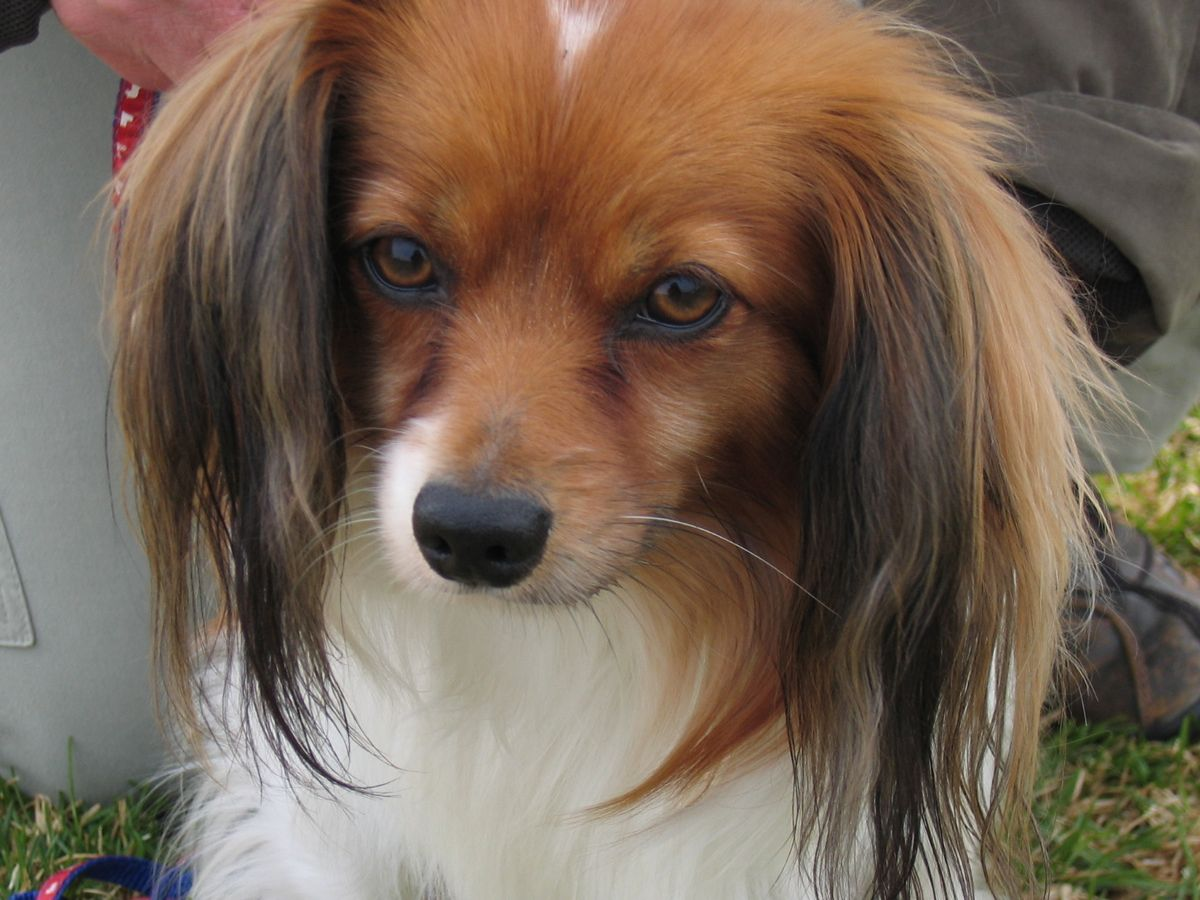 Грустная морда собаки фален фото