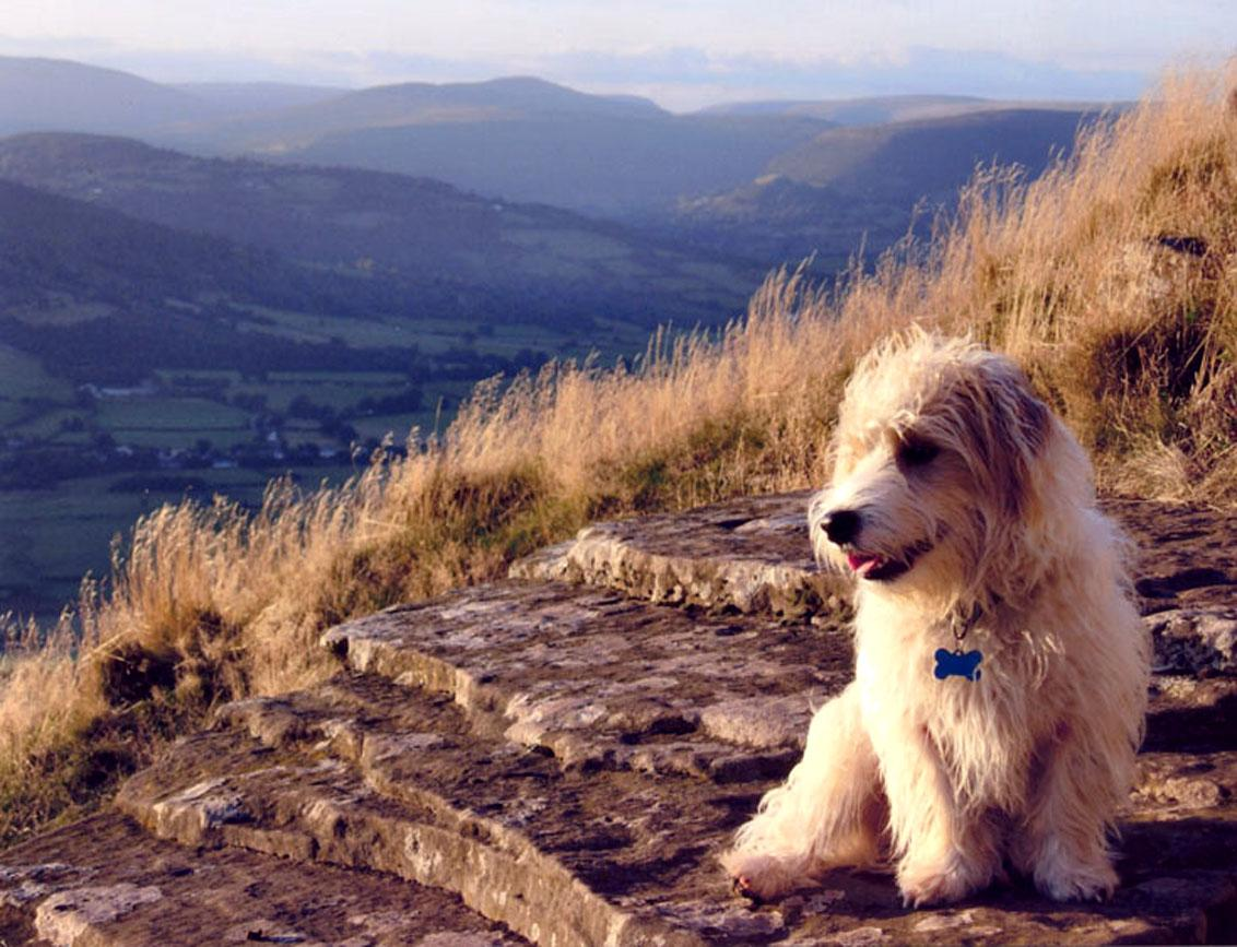 Sporting Lucas Terrier on the mountain wallpaper