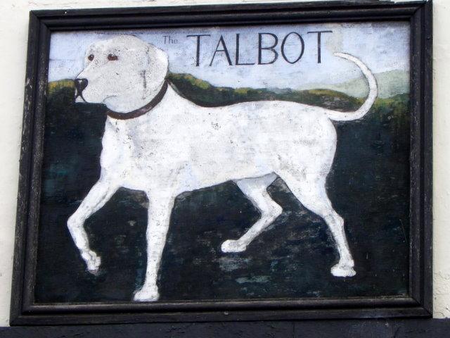 Собака талбот фото