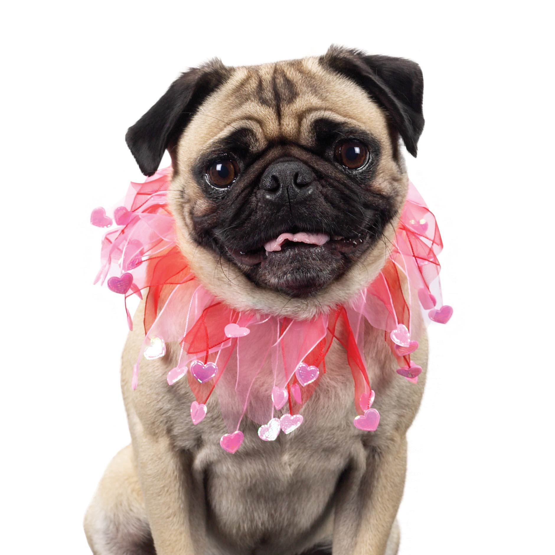 Great Valentine Bow Adorable Dog - valentine-pug-dog-wallpaper  Photograph_476471  .jpg