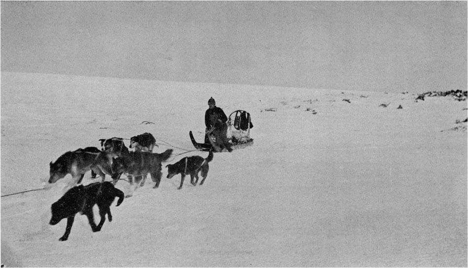 Собаки святого Джона на прогулке фото