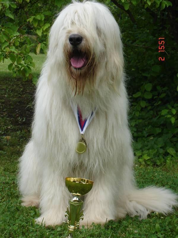 Южнорусская овчарка-победитель фото
