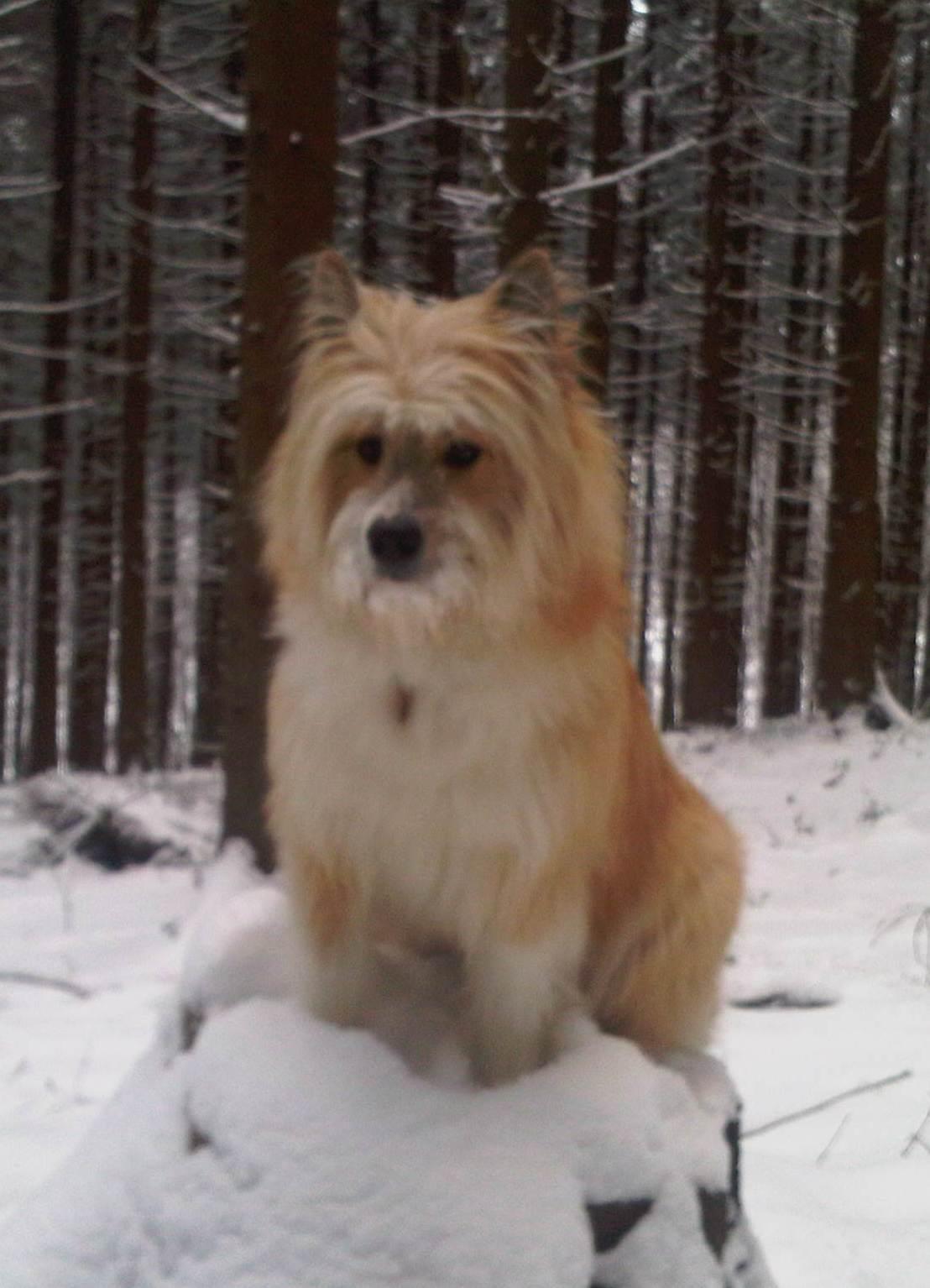 Зимнее фото собаки эло фото
