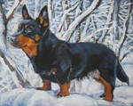 Winter Lancashire Heeler dog