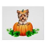 Yorkshire Terrier and pumpkin