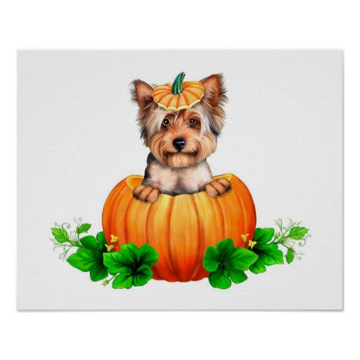 Yorkshire Terrier and pumpkin фото